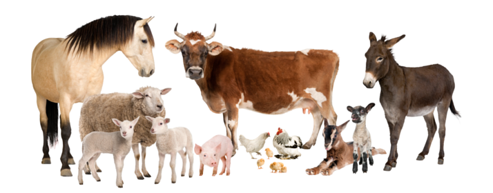 Preventive Controls for Animal Food