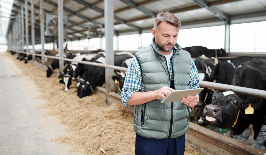 Man on tablet at a dairy