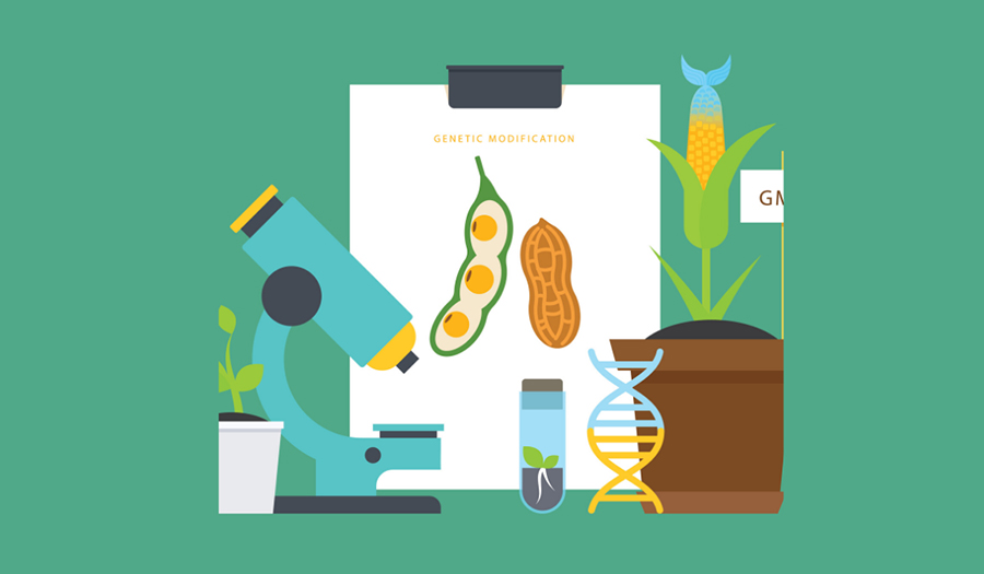 Microscope, GMO plants, DNA strand, test tube, and clipboard showing GMO soybeans and peanuts